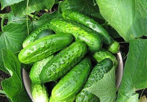 Наполигоне ТБО вЭнгельсе уничтожили 1,5 тонны турецких овощей