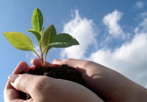 ВСаратове впамять обучастниках ВОВ высадят «именные» деревья