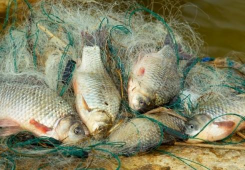 Нареке Чардым схвачен  рыбак сэлектроудочкой