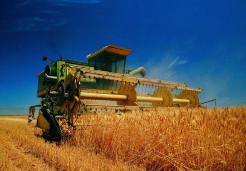 Украинские аграрии намолотили 12,5 млн тонн кукурузы