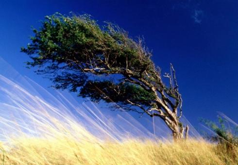 ВСаратовской области ожидаются грозы исильный ветер