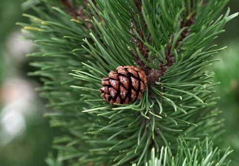 ВСаратовской области планируют реализовать 54 000 елок