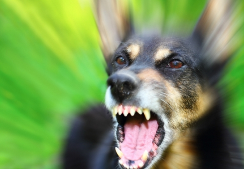 Губернатор Саратовской области потребовал усилить борьбу сбродячими собаками