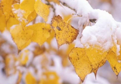 Мокрый снег игололед ожидаются врегионе 27октября