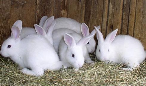 Гражданин Ртищево похитил кроликов, чтобы реализовать и приобрести спирт