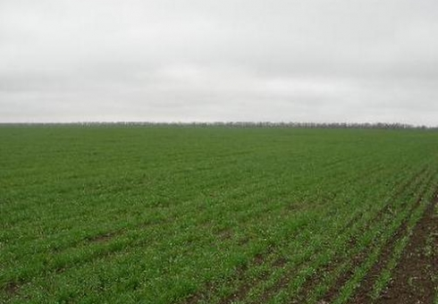 Аграрии Житомирщины посеяли 90% яровых зерновых