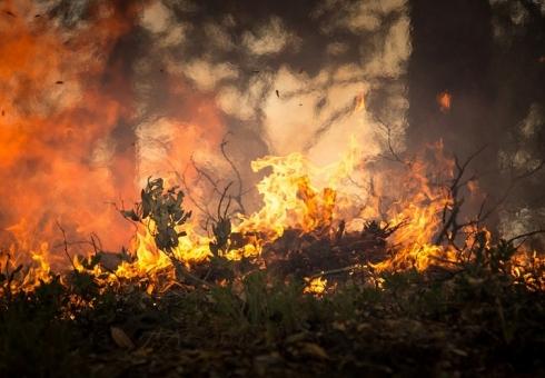 Под Саратовом лесной пожар тушили 15 машин и96 человек