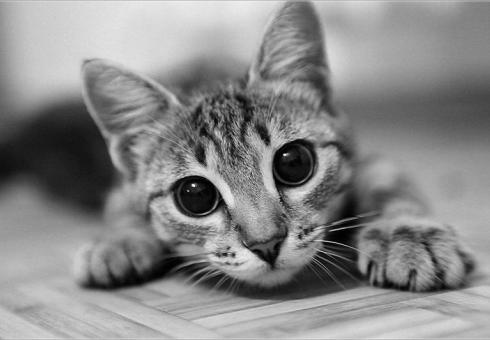 Карантин виз-за умершей отбешенства кошки объявлен впоселке Штейнгардт