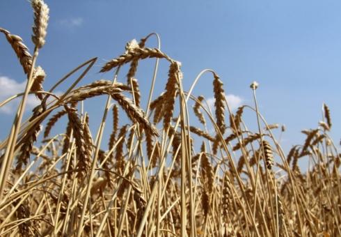 Валерий Радаев установил саратовским аграриям планку в5 млн тонн зерна