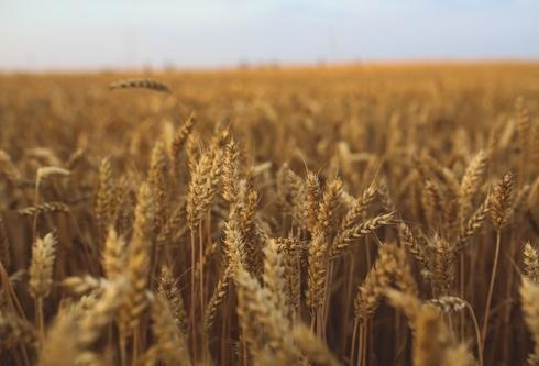 Вобласти намолочено 4 млн тонн зерна